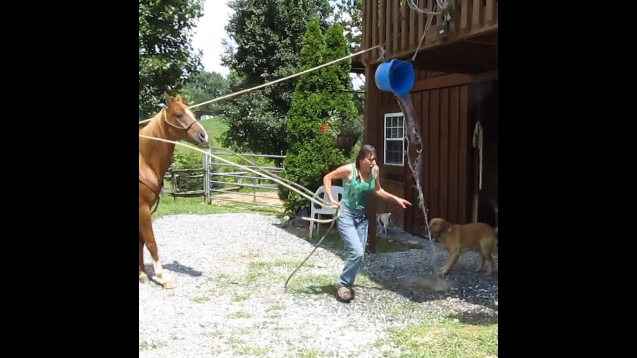Video com cenas incríveis de cavalos