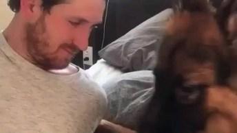 Vídeo Com Dono Brincando Com Seu Amigão De 4 Patas, Muito Fofo!