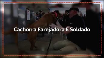 Vídeo Com Emocionante Reencontro De De Cão Farejador E Sargento Aposentado!