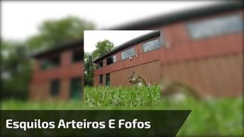 Vídeo Com Esquilos Fofinhos, Olha Só Como Eles Aprontam, Confira!