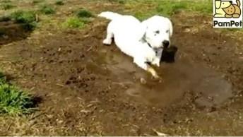 Vídeo Com Filhote De Cachorro Brincando Na Lama, Olha A Mamãe Brava!