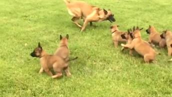 Vídeo Com Filhotes De Cachorros, Os Mais Fofinhos Estão Aqui!