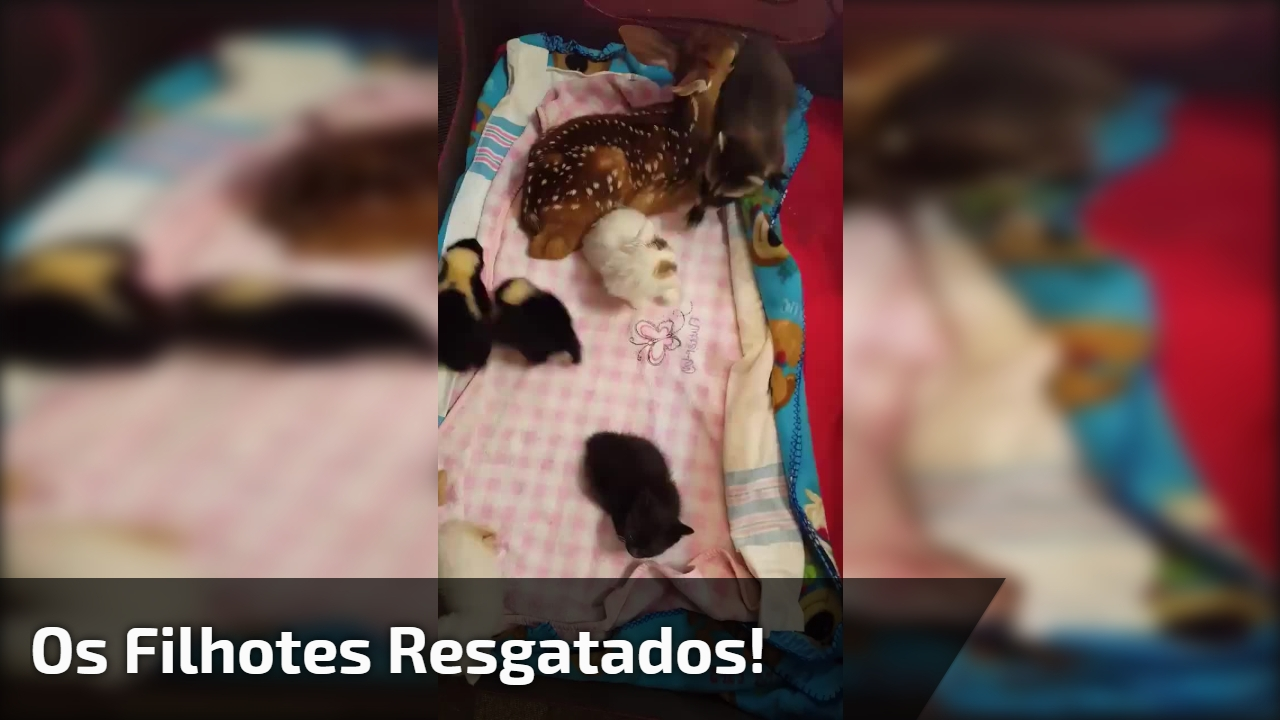 Vídeo com filhotes que foram resgatados, olha só quanta fofura!!!