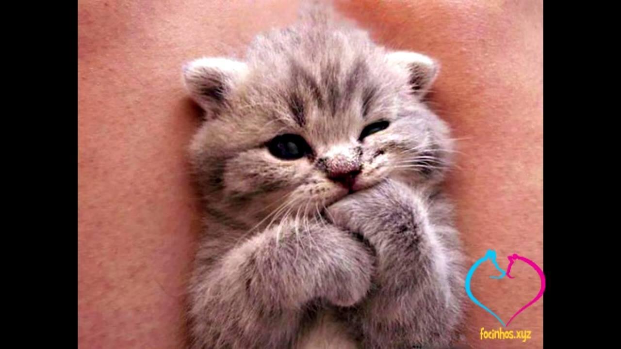 Vídeo com fotos fofas de filhotes de gatinhos