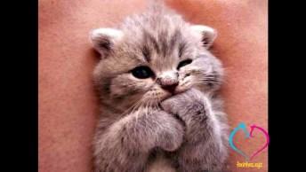Vídeo Com Fotos Fofas De Filhotes De Gatinhos, É Muita Fofura Em Um Único Vídeo!