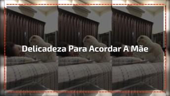 Vídeo Com Gatinho Acordando Sua Dona, O Vídeo Mais Fofinho Que Você Vará Hoje!