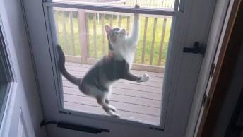 Vídeo Com Gatinhos Aprontando Todas, Olha Como Eles São Arteiros!