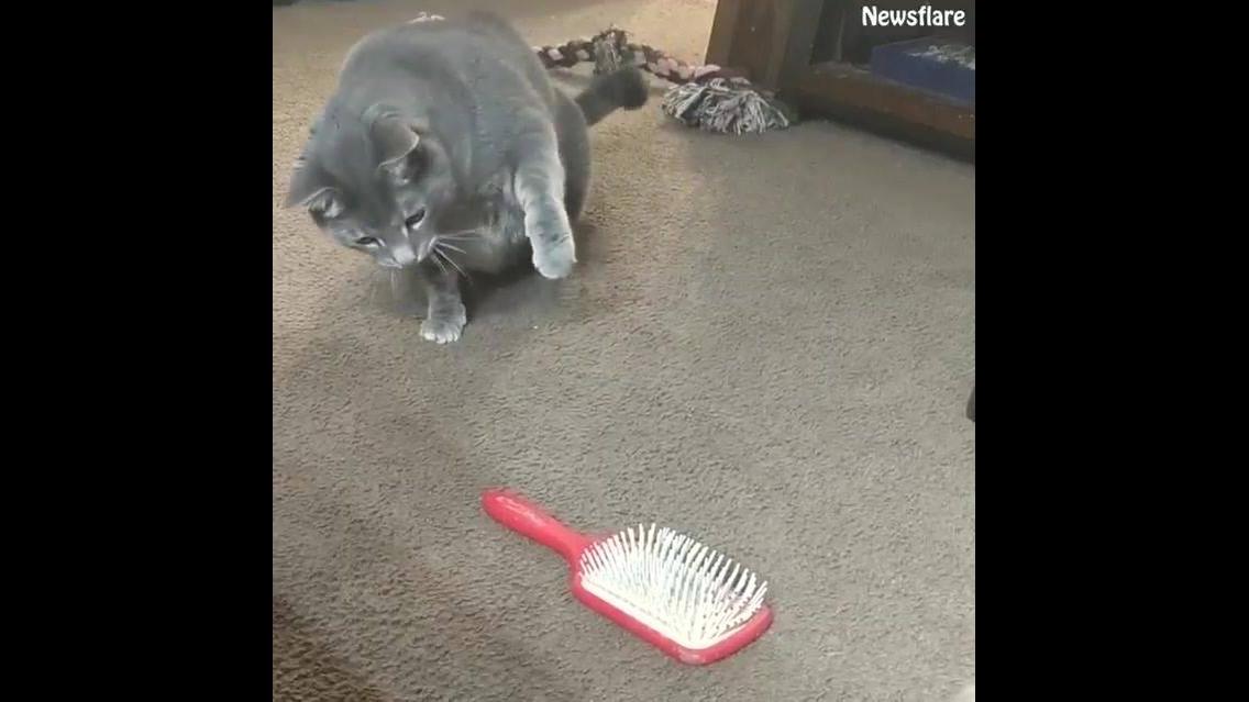 Vídeo com gatinhos em situações engraçadinhas