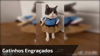 Vídeo Com Gatinhos Engraçados, Veja Quanta Arte Esta Galerinha Apronta!