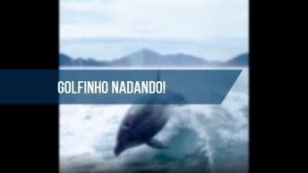 Vídeo Com Golfinhos Nadando Em Auto Mar Junto A Lancha, Veja Que Espetáculo!