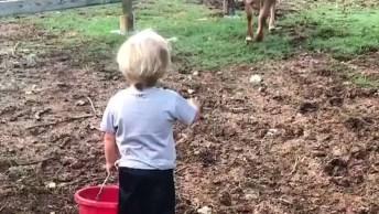 Vídeo Com Humanos E Vacas, Um Relacionamento Possivel E Muito Lindo!