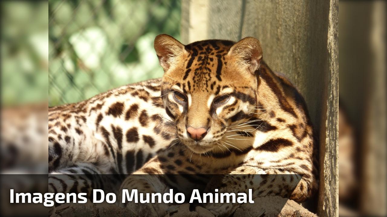 Video com imagens do mundo animal, a natureza é perfeita!