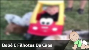 Vídeo Com Imagens Fortíssimas De Ataque De Fofura, Olha Só Estes Filhotes!