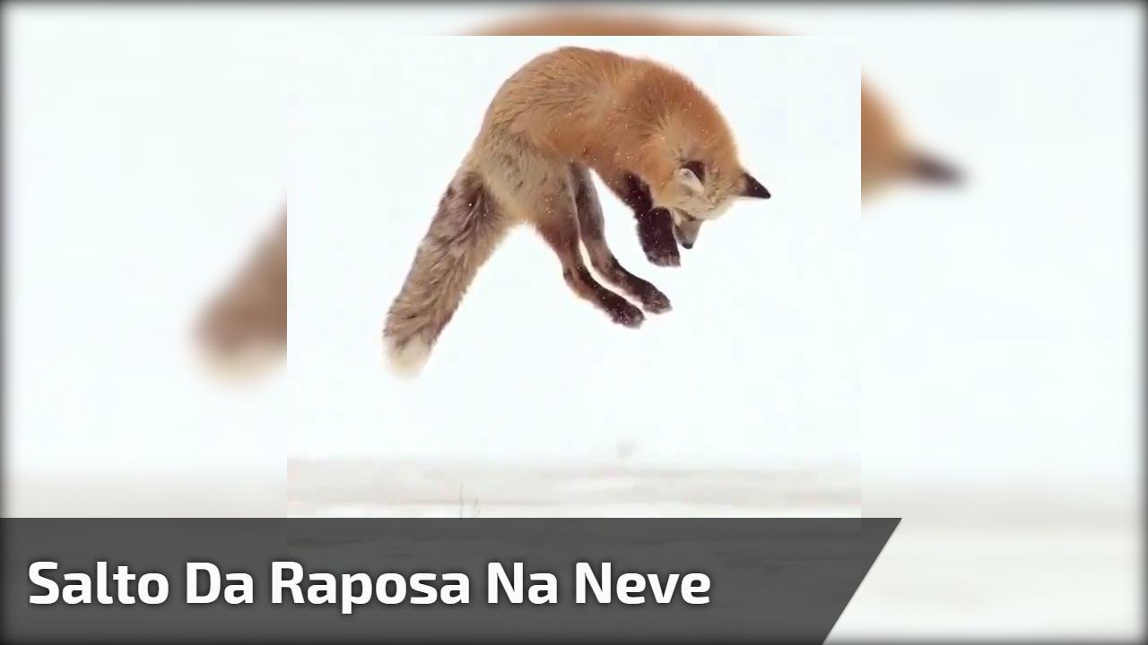 Salto da raposa na neve