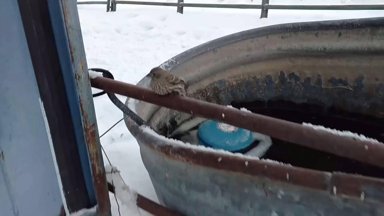 Vídeo com linda atitude de um homem salvando um pequeno pássaro