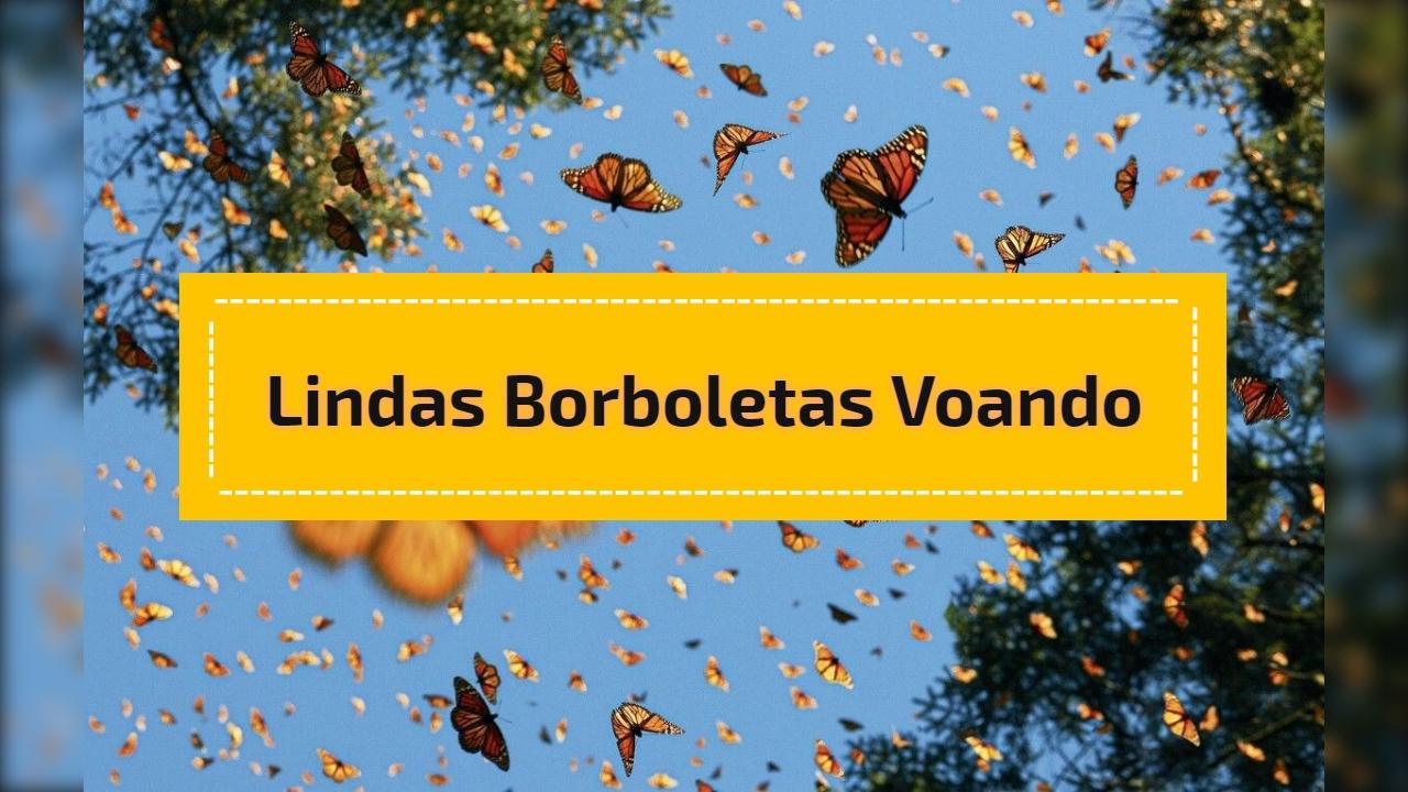 Lindas borboletas voando