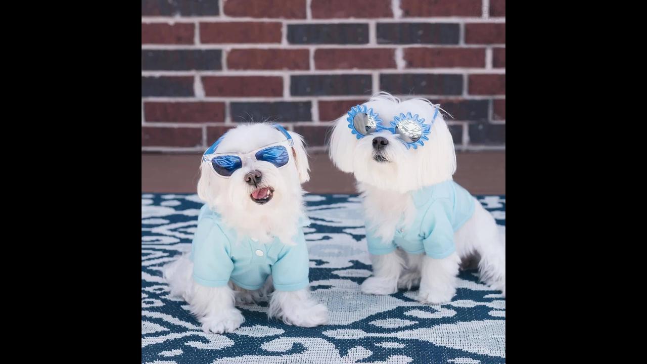 Vídeo com lindas fotos de cachorrinhos fofinhos, olha só que lindas!!!