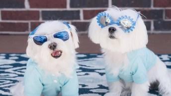 Vídeo Com Lindas Fotos De Cachorrinhos Fofinhos, Olha Só Que Lindas!