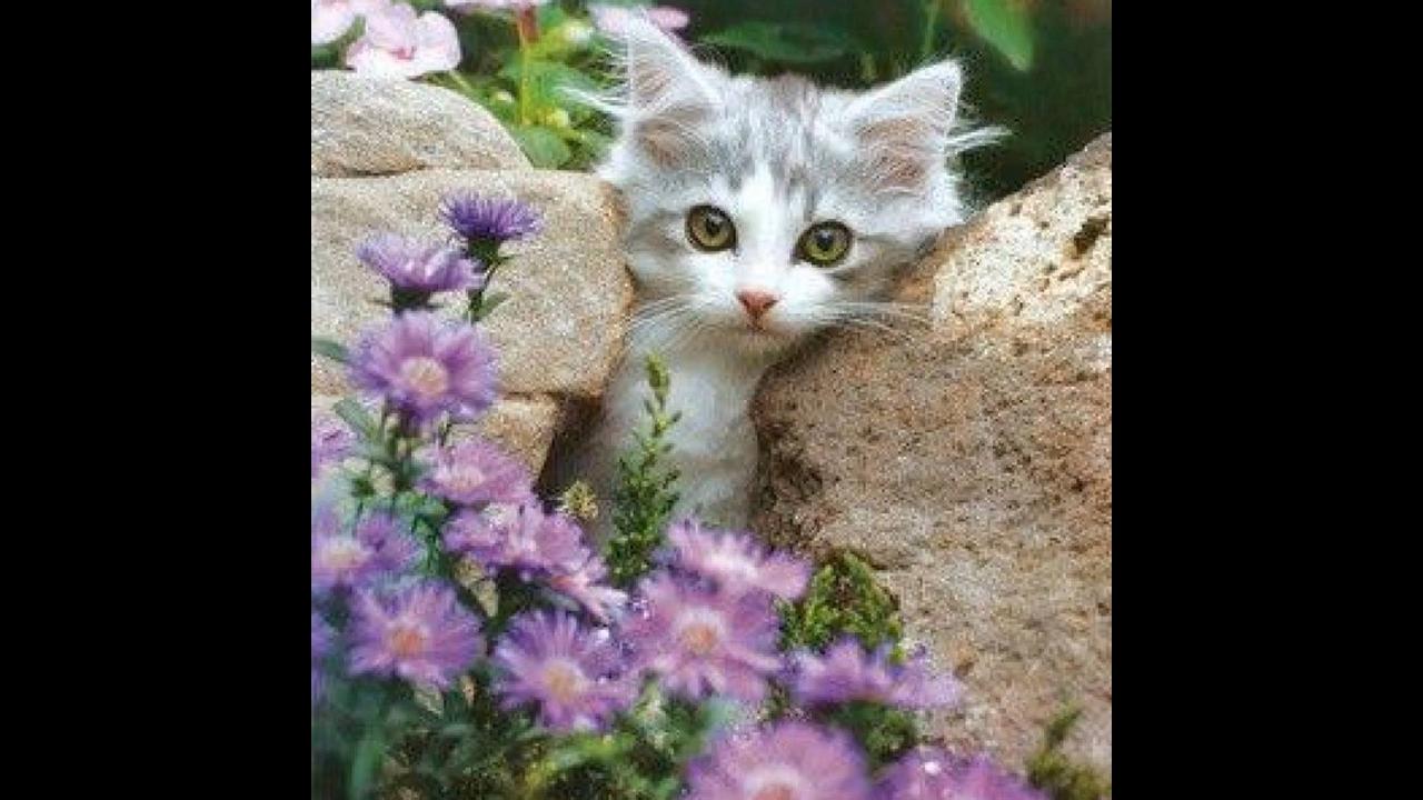 Vídeo com lindas fotos de gatinhos! Como estes animais são bonitos!!!