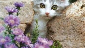 Vídeo Com Lindas Fotos De Gatinhos! Como Estes Animais São Bonitos!