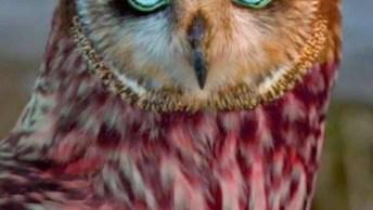Vídeo Com Lindas Fotos De Pássaros De Várias Especies, O Mundo Animal É Incrível
