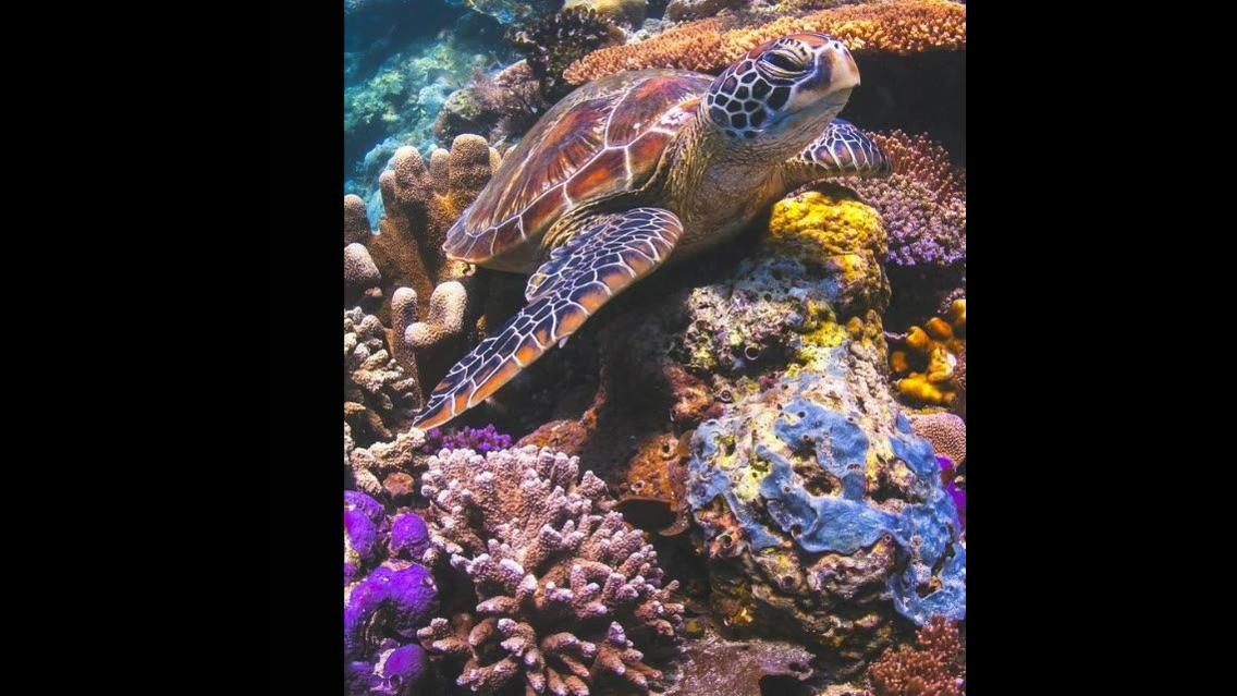 Vídeo com lindas fotos de peixes