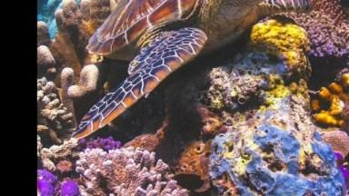 Vídeo Com Lindas Fotos De Peixes, Como Os Animais Marinhos São Lindos!