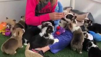 Vídeo Com Momento Fofura Do Dia, Veja A Quantidade De Filhotes Fofinhos!
