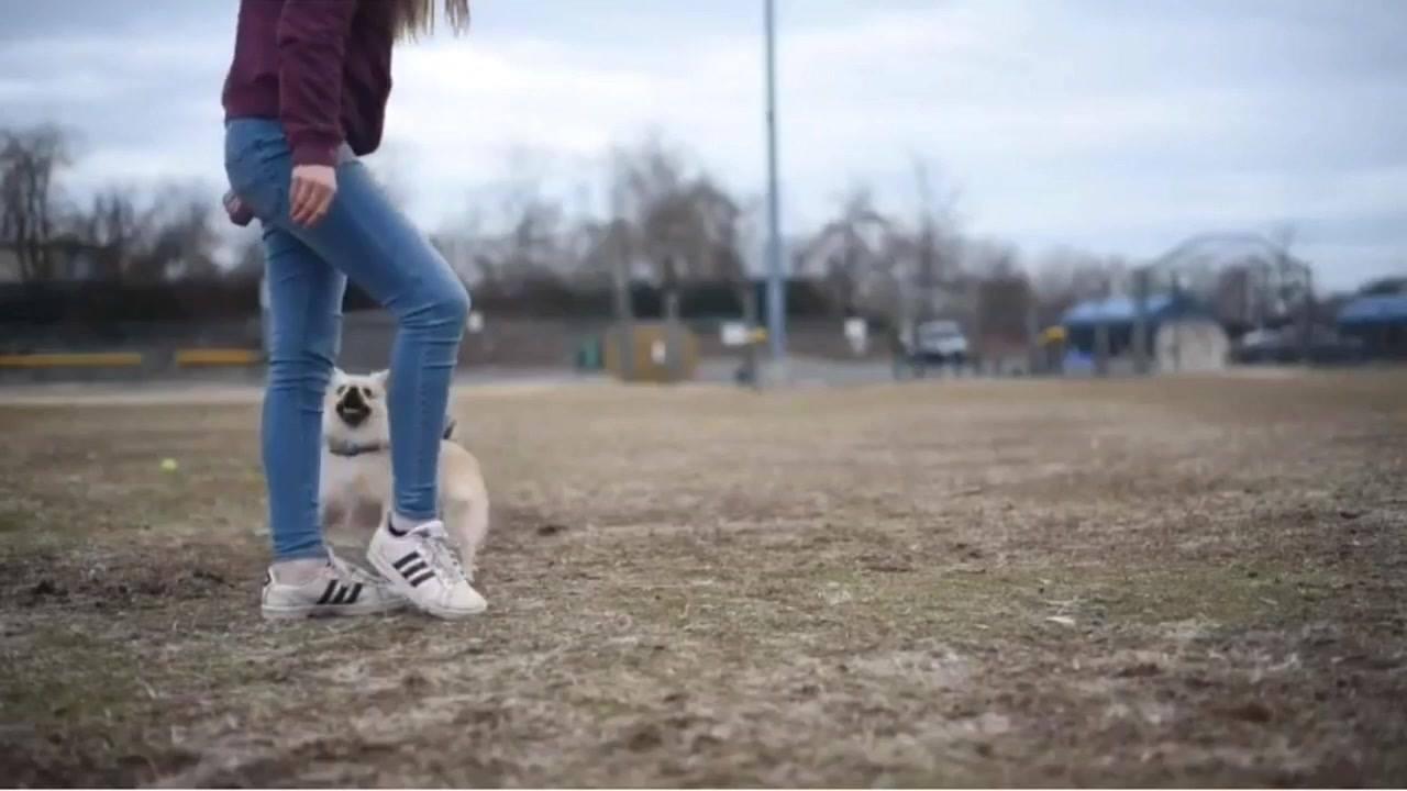 Vídeo com momentos divertidos com cachorro
