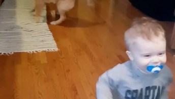 Vídeo Com Momentos Engraçados Com Golde Retriever, Como Eles São Fofos!