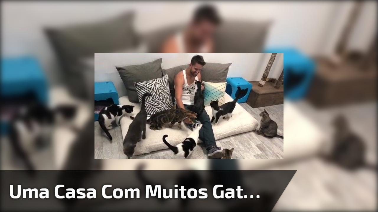 Uma casa com muitos gatos
