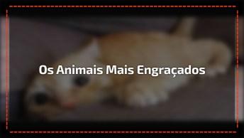 Vídeo Com Os Animais Mais Engraçados Que Você Já Viu, Bora Rir Um Pouco!