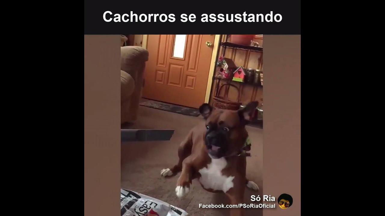 Vídeo com os cachorros se assustando
