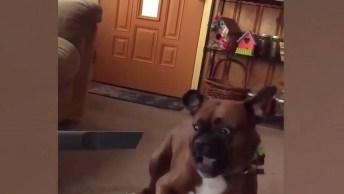 Vídeo Com Os Cachorros Se Assustando, Como São Fofinhos Estes Animais!