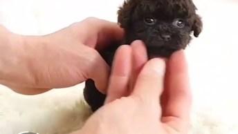 Vídeo Com Os Cães Mais Fofos Que Você Já Viu, É Amor Demais Em Um Único Vídeo!