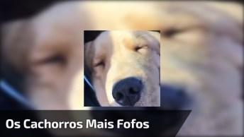 Vídeo Com Os Cães Mais Fofos Que Você Verá Hoje, Você Vai Se Apaixonar!