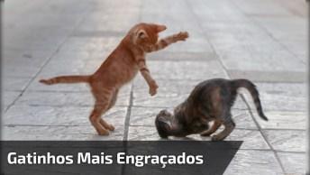 Vídeo Com Os Gatinhos Mais Engraçados Que Você Já Viu, Eles Vivem Aprontando!