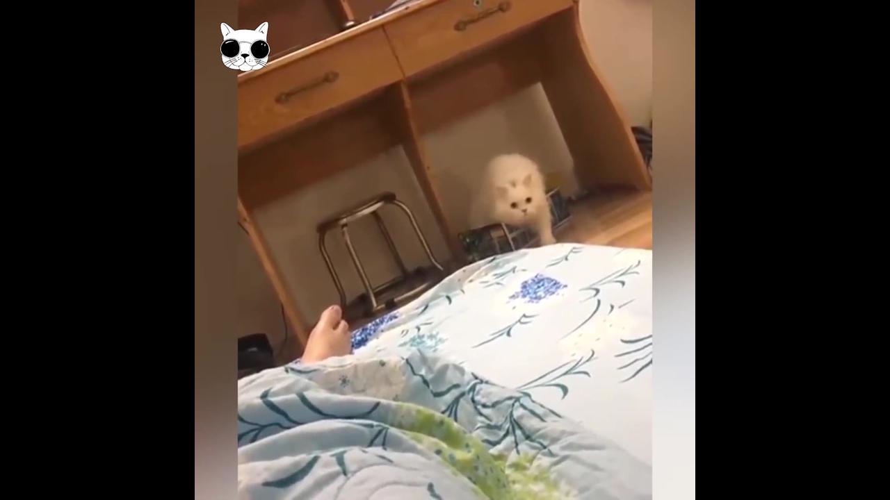 Vídeo com os gatinhos mais engraçados que você já viu, olha só estas carinhas!!!