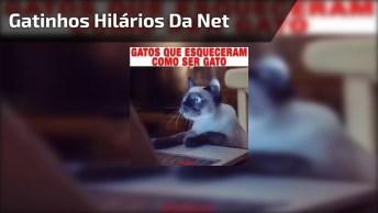 Vídeo Com Os Gatinhos Mais Hilários Da Net! Alguém Avise-Os Que Eles São Gatos!