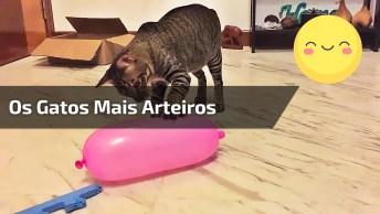 Vídeo Com Os Gatos Mais Arteiros Da Internet, Olha Só O Que Eles Aprontam!