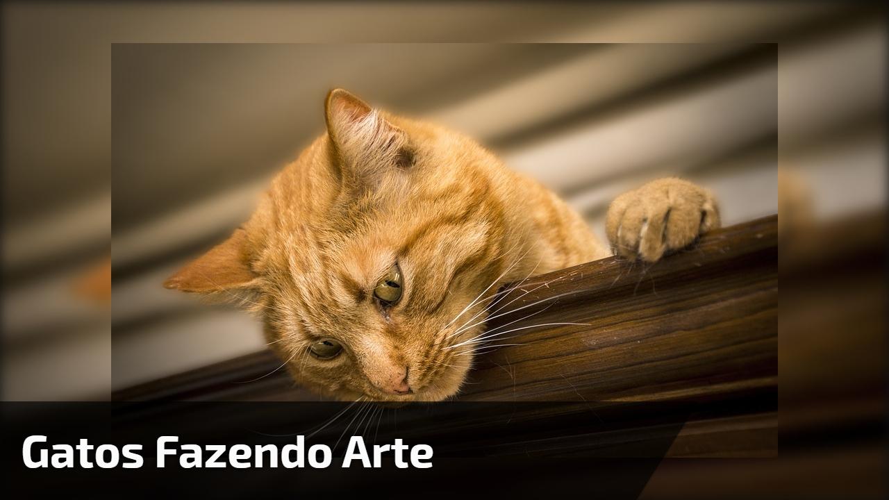 Gatos fazendo arte