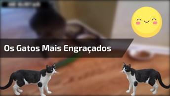 Vídeo Com Os Gatos Mais Engraçados Que Você Verá Hoje, Olha Só Estas Criaturas!
