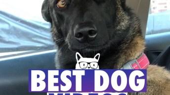 Vídeo Com Os Melhores Cães De 2017 Da Internet, A Retrospectiva Mais Fofa!