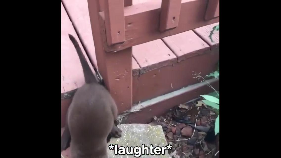 Vídeo com situações engraçadas com animais de estimação