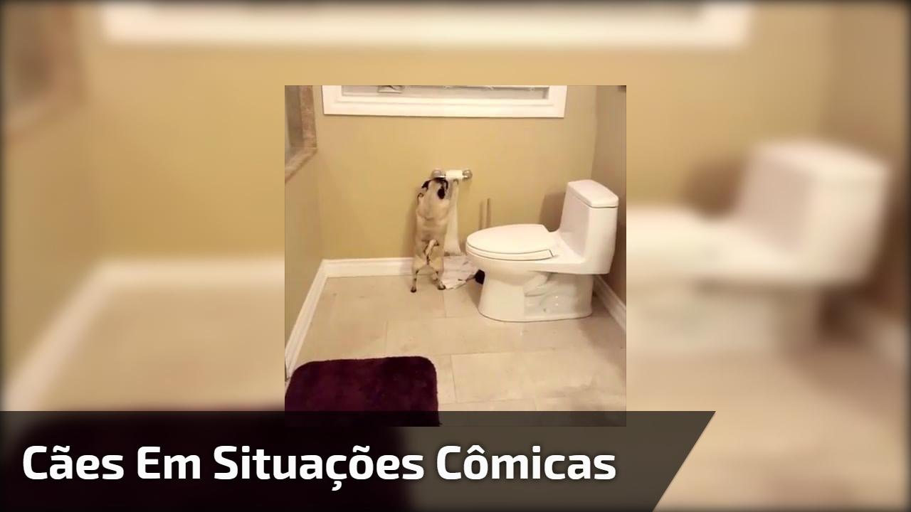 Cães em situações cômicas