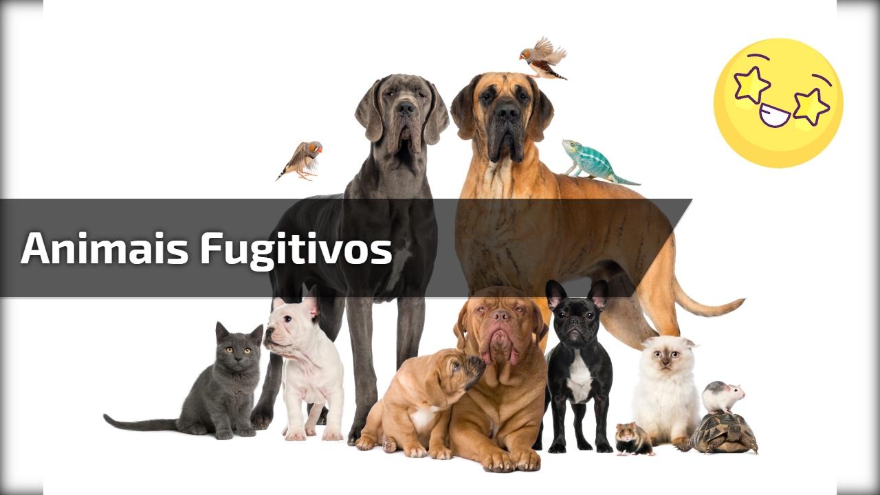 Animais fugitivos