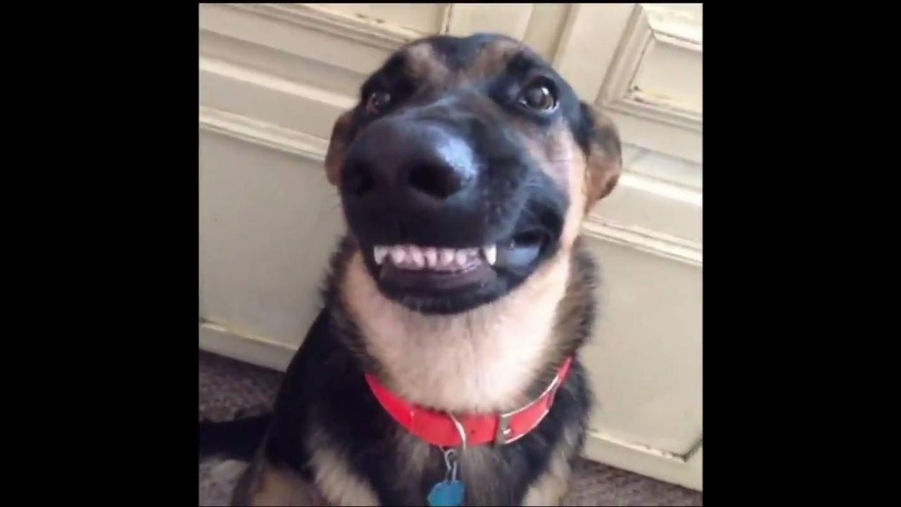 Vídeo com situações engraçadas de animais