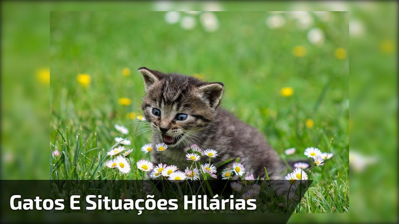 Gatos e situações hilárias