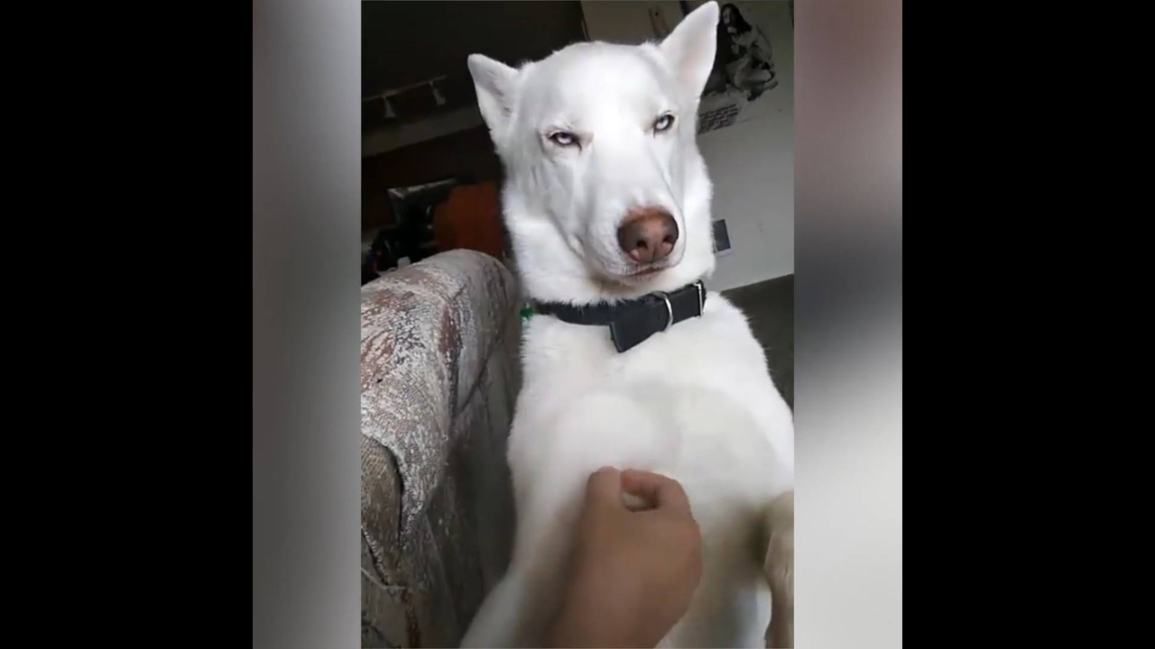 Vídeo com situações fofas com cães