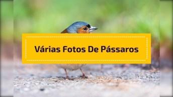 Vídeo Com Várias Fotos De Pássaros Na Natureza. Todo Animal Merece Ser Livre!